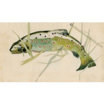 Canvas Print - Brown Trout