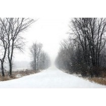 Canvas Print - Winter Road