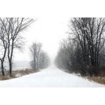 Canvas Print - Winter Road